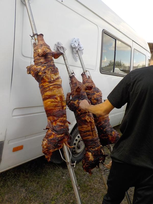 Tri pečena praseta u Bačkoj Topoli